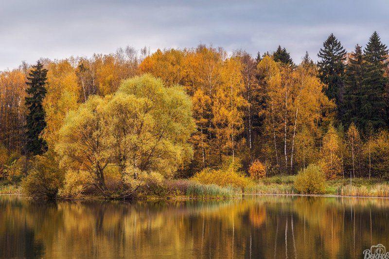 Долгие пруды, Долгопрудный, Московская область, Осень, Подмосковье Долгие прудыphoto preview