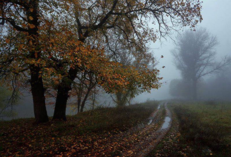 Ходит осень по дорожке.photo preview
