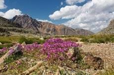 За цветами в горы