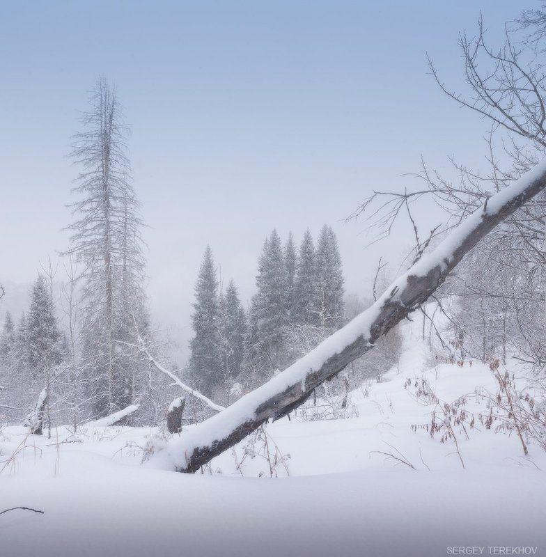 Заилийские Алатау, Казахстан, Тропа на Кок Жайляу, Тянь-шань, Фотографии Казахстана Зима еще не пришлаphoto preview