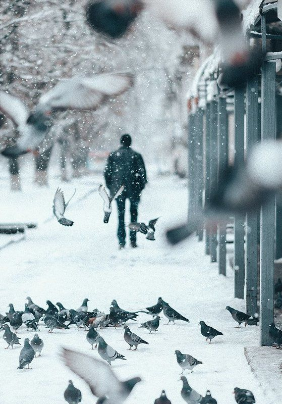 Голуби, Зима, Коростышев, Репортаж, Украина, Чорный Любовь и голубиphoto preview