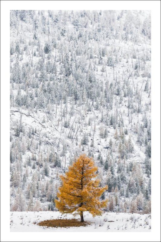 алтай, осень, чибит, чибитка, одиночество Одиночество осень ..photo preview
