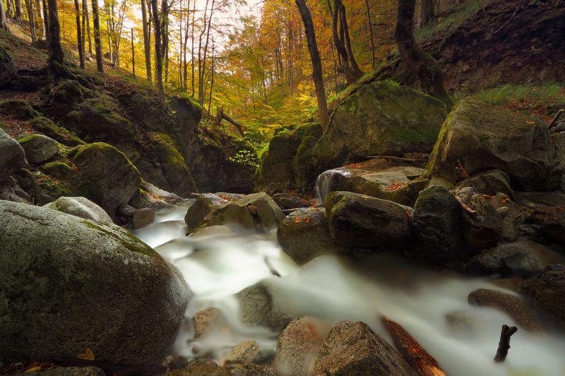 Autumn, Bulgaria, Forest, Mountain, River Осеньphoto preview