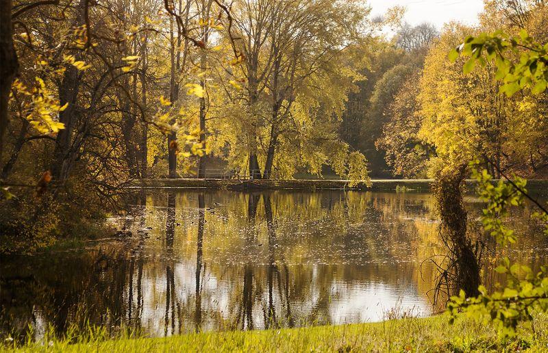 autumn,trees Autumnphoto preview