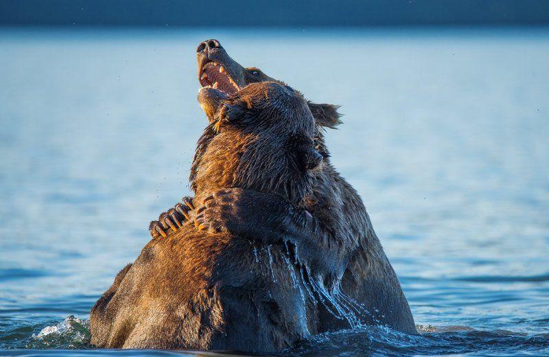 Медвежьи страстиphoto preview