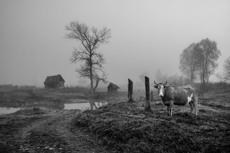 Деревенские картинкиphoto preview