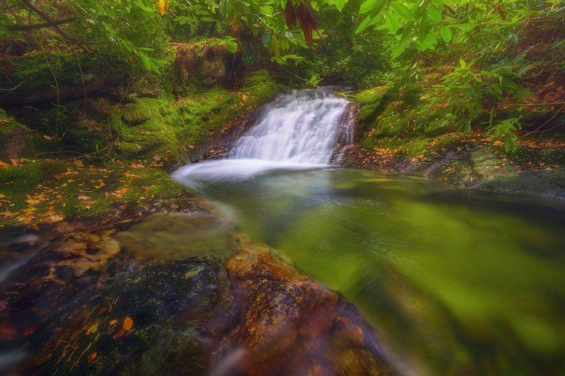 Прогулка по лесу!photo preview