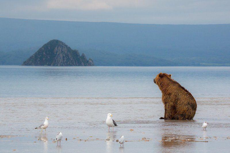 камчатка, медведь, озеро, фототур, путешествие, природа, Он все еще груститphoto preview