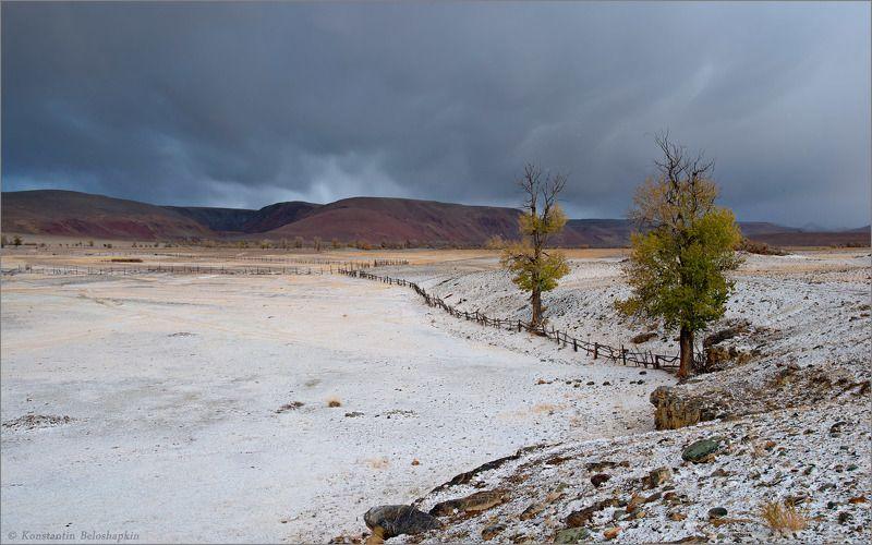 алтай, реликтовые тополя, чаган узун В долине Длинного Чаганаphoto preview