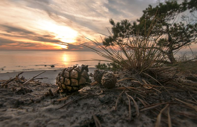 cones,pine,sunset,sea The silence of the dunesphoto preview