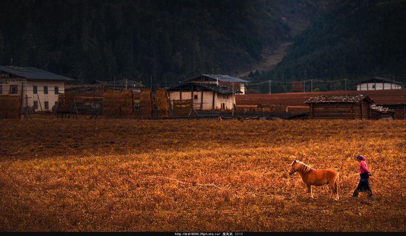赶马的当地人A local man who drives a horse.photo preview