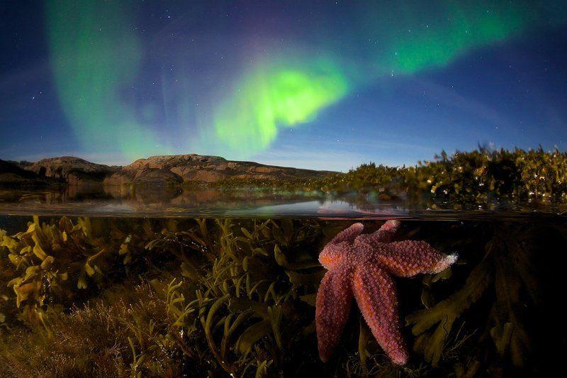 северный ледовитый океан звезда подводная съемка сплит полярное сияние звезды побережье водоросли Звездный дуэтphoto preview