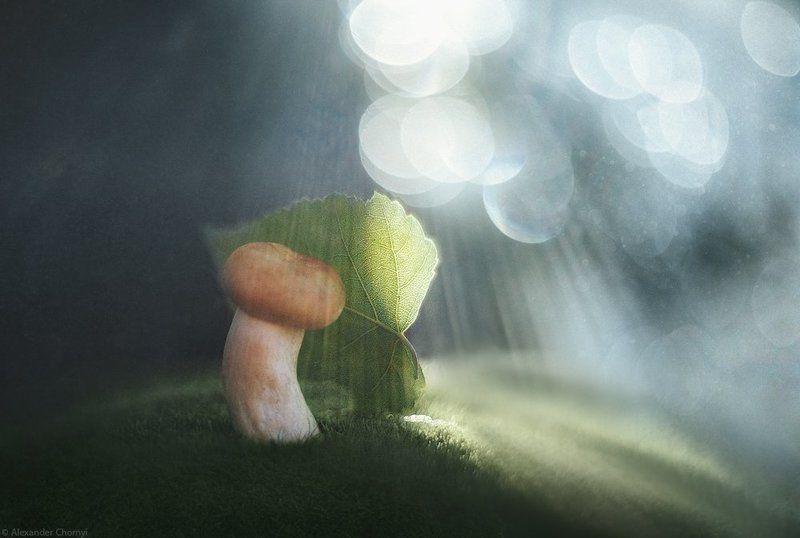 украина, коростышев, лето, солнце, грибы, Играть в прятки с солнцемphoto preview