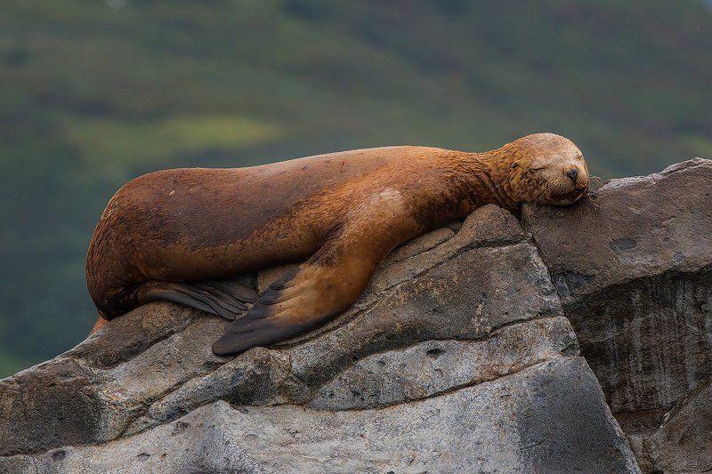 камчатка, фототур, путешествие, природа, океан, сивуч, лев, яхта Сладкий сонphoto preview