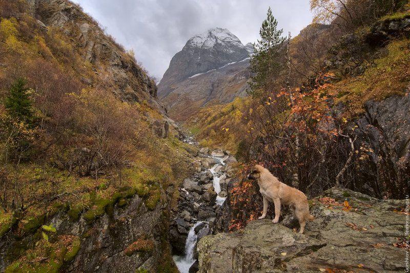 собака,ущелье,кавказ,горы,река,домбай,осень,скала,водопад У Чёртовой Мельницыphoto preview