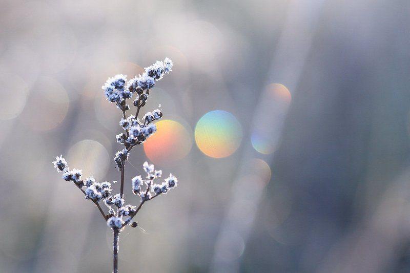 иней, утро, роса В утренних алмазахphoto preview