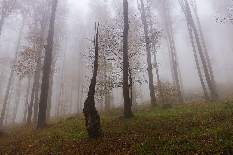 Туманныйphoto preview
