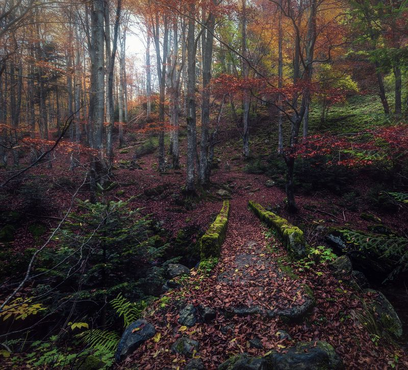 forest, autumn, bridge, tree,landscape Magical forestphoto preview