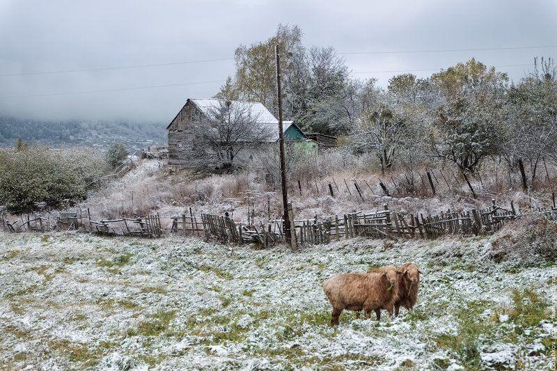 теберда,горы,село,овцы,снег,осень,утро,пейзаж Снежное утро с овечкамиphoto preview
