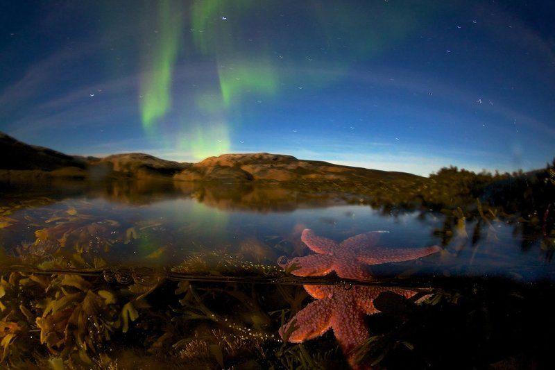 северный ледовитый океан звезда подводная съемка сплит полярное сияние звезды побережье водоросли И звезда с звездою говорит...photo preview