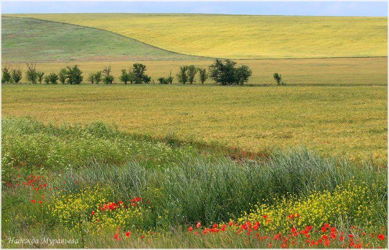 крым, керченский полуостров Макиphoto preview
