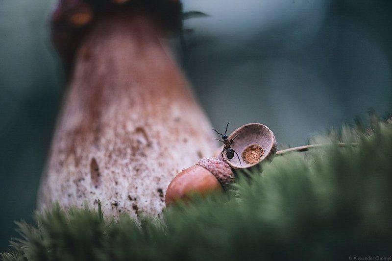 украина, коростышев, лето, грибы, лес красота, Будто и не гриб - дворец!photo preview