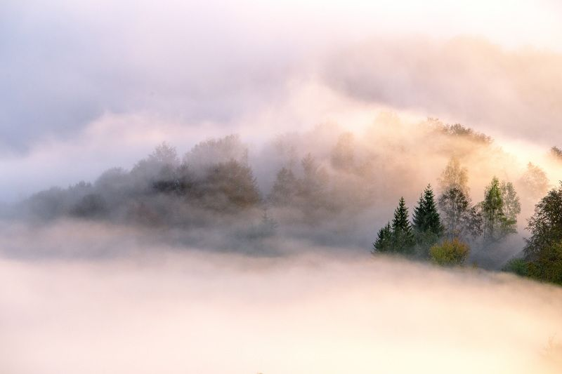 fog,mist,trees,morning,sunrise Foggy morningphoto preview