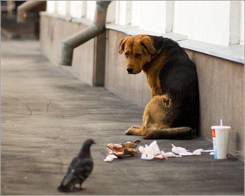 пес, дворняга, бездомный, голод, собаки, взгляд Жил-был пес...photo preview