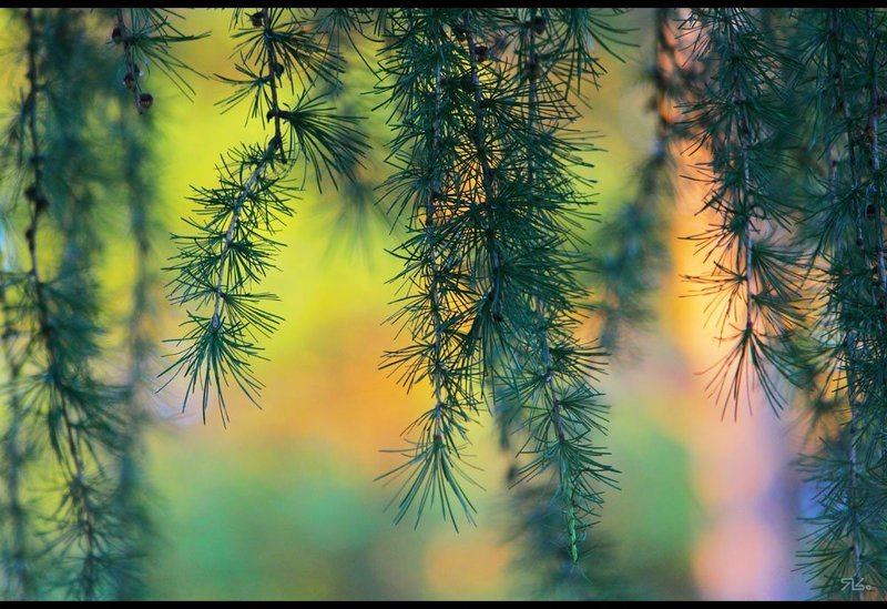 лес, шел, мимо, меня Шел я лесоМ...photo preview