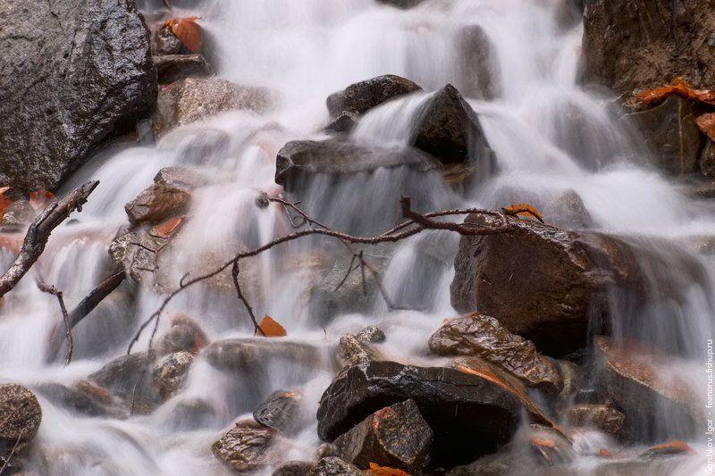 ручей, горы,каказ,домбай,лес, длинная выдержка, вода, водопад, соень Горный осенний ручейphoto preview