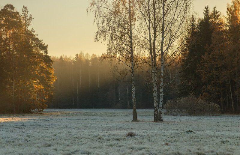 осень, павловск, павловский парк, питер Осень с привкусом зимы. . . .photo preview