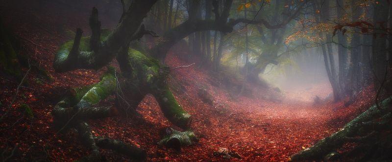 крым, демерджи, осень, лес, туман Затерянная дорогаphoto preview