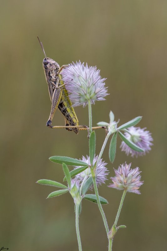 macro, makro, insect, wildlife, nature, ...photo preview