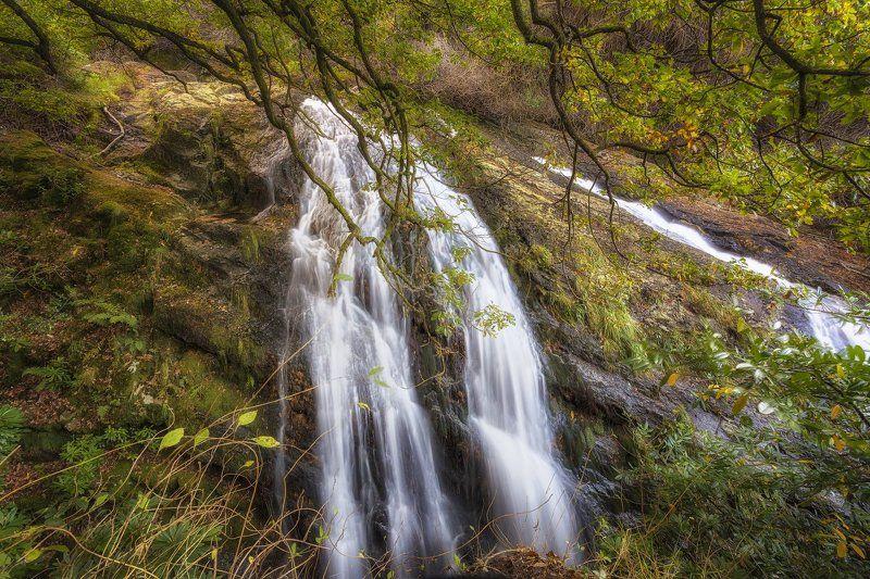 Сказочный лес!photo preview