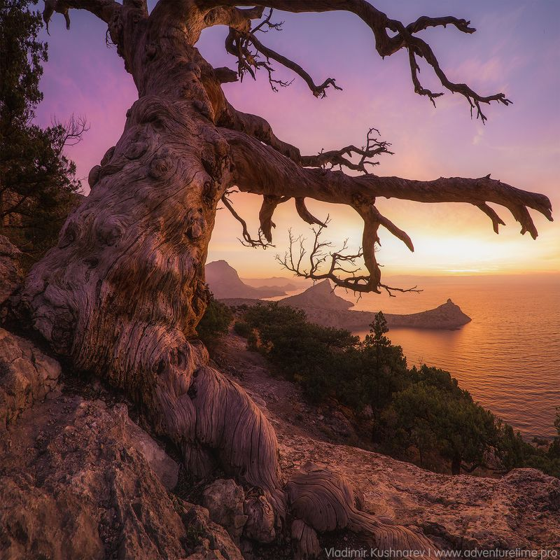 дерево, пейзаж, крым, новый cвет, рассвет, море, мыс капчик Деревоphoto preview
