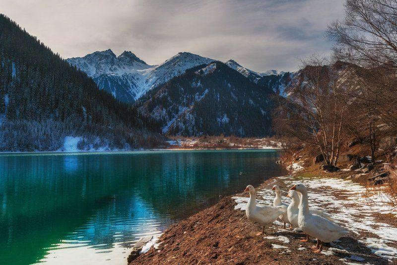 горы, осень, озеро, иссык, гуси Пейзаж с гусямиphoto preview