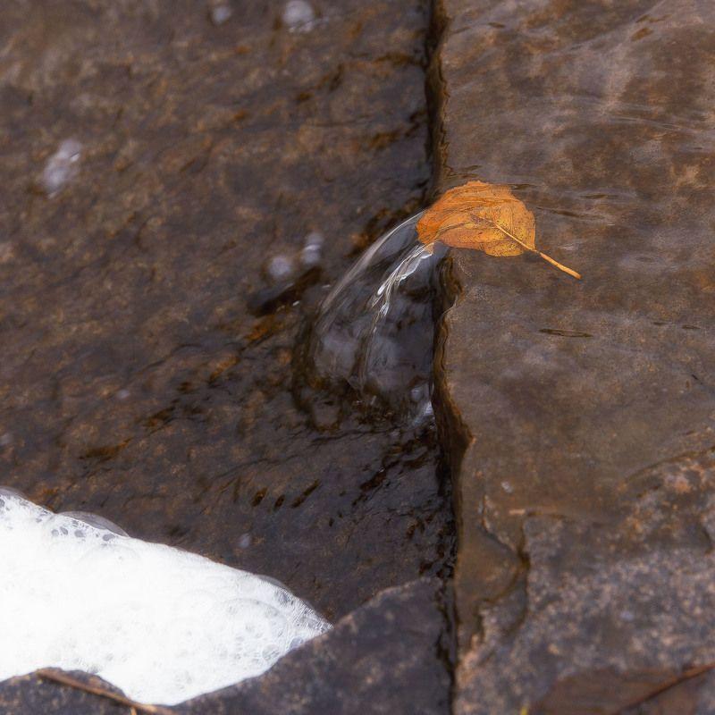лист, борьба, вода, камень, течение Не сдаваться!photo preview