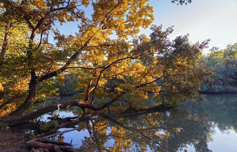 Осень у рекиphoto preview
