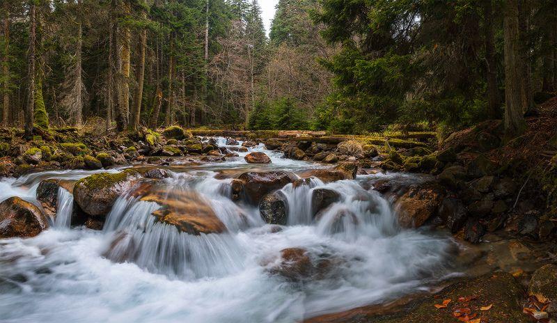 Сказки дремучего лесаphoto preview