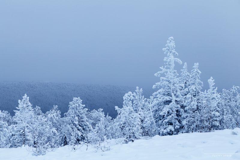 природа, пейзаж, зима, снег, елки, урал, россия, ГУХ, северный урал прямо с севераphoto preview