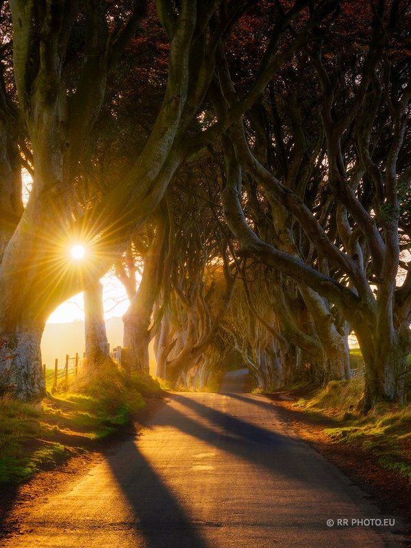 ireland, northern ireland, The Dark Hedges, sunrise, road, landscape, armoy, autumn,  light, trees, road, sun,  The Dark Hedgesphoto preview