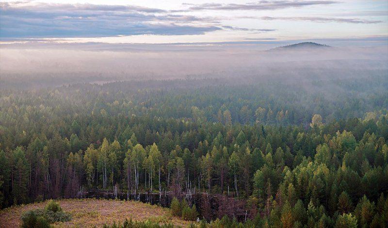 хвойный лес туман восход осень После дождя.photo preview