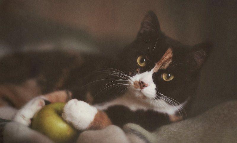 кошка, кошки Чилькаphoto preview