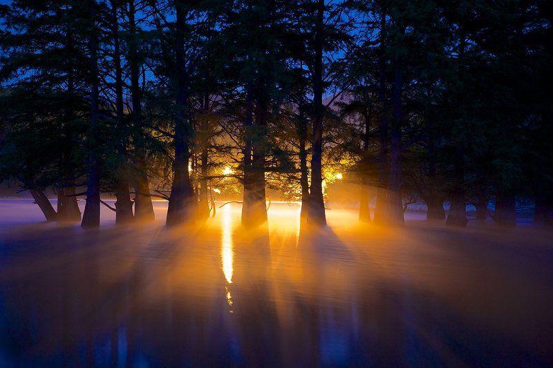 роща болотных кипарисов сукко рассвет утро Сон исполиновphoto preview