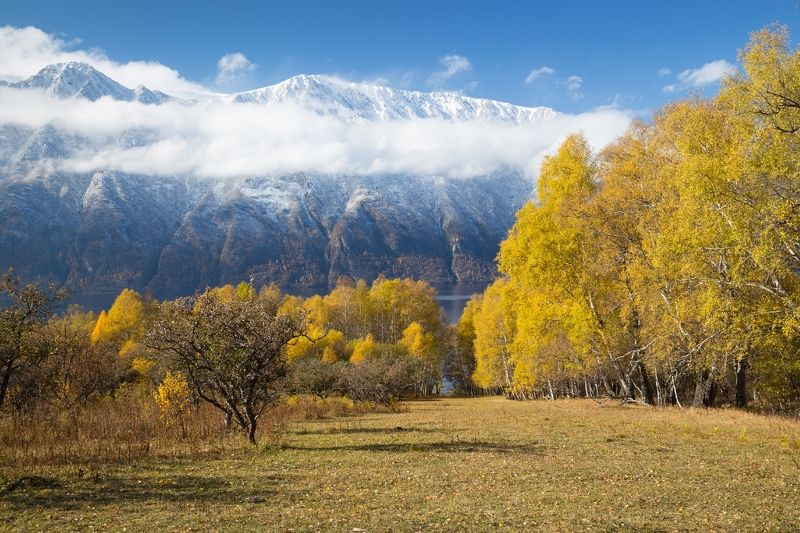 Алтын-Ту, Алтын-Туу, Телезкое озеро, яблони, золотая осень Осенние краски Алтын-Туphoto preview