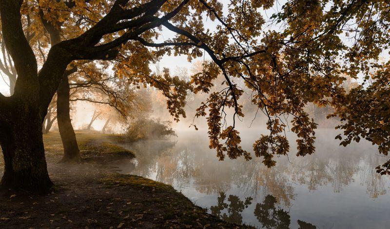 туман , свет , осень Утро пейзажного фотографаphoto preview