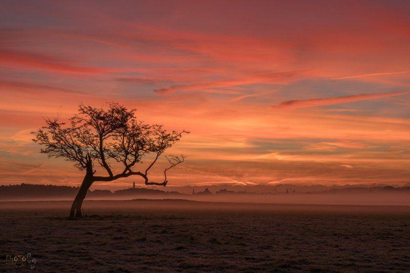 ирландия, рассвет, фототур, дублин Рассвет в Феникс-паркеphoto preview