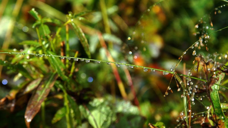 макро, раса , осень  Бриллианты природы! photo preview