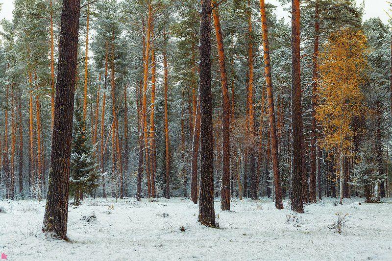 Лес. Просто лес.photo preview