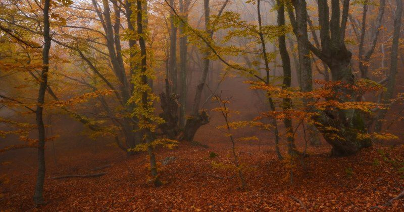 В том волшебном лесуphoto preview